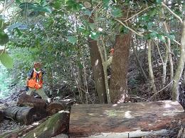森林散策1.jpg