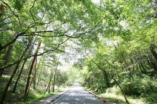 森林公園の講演会&観察会