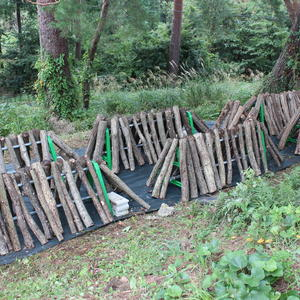 写真:原木シイタケ ほだ場を整地しました。