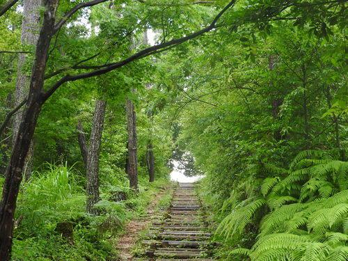 写真:ネイチャー③森の声に耳をかたむけよう