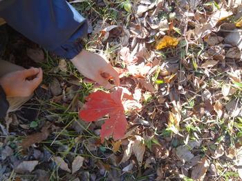 写真:森のムッレ教室④ たくさん色を集めよう
