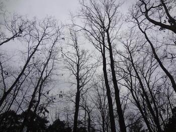 写真:ネイチャー⑥ 冬の森を楽しもう