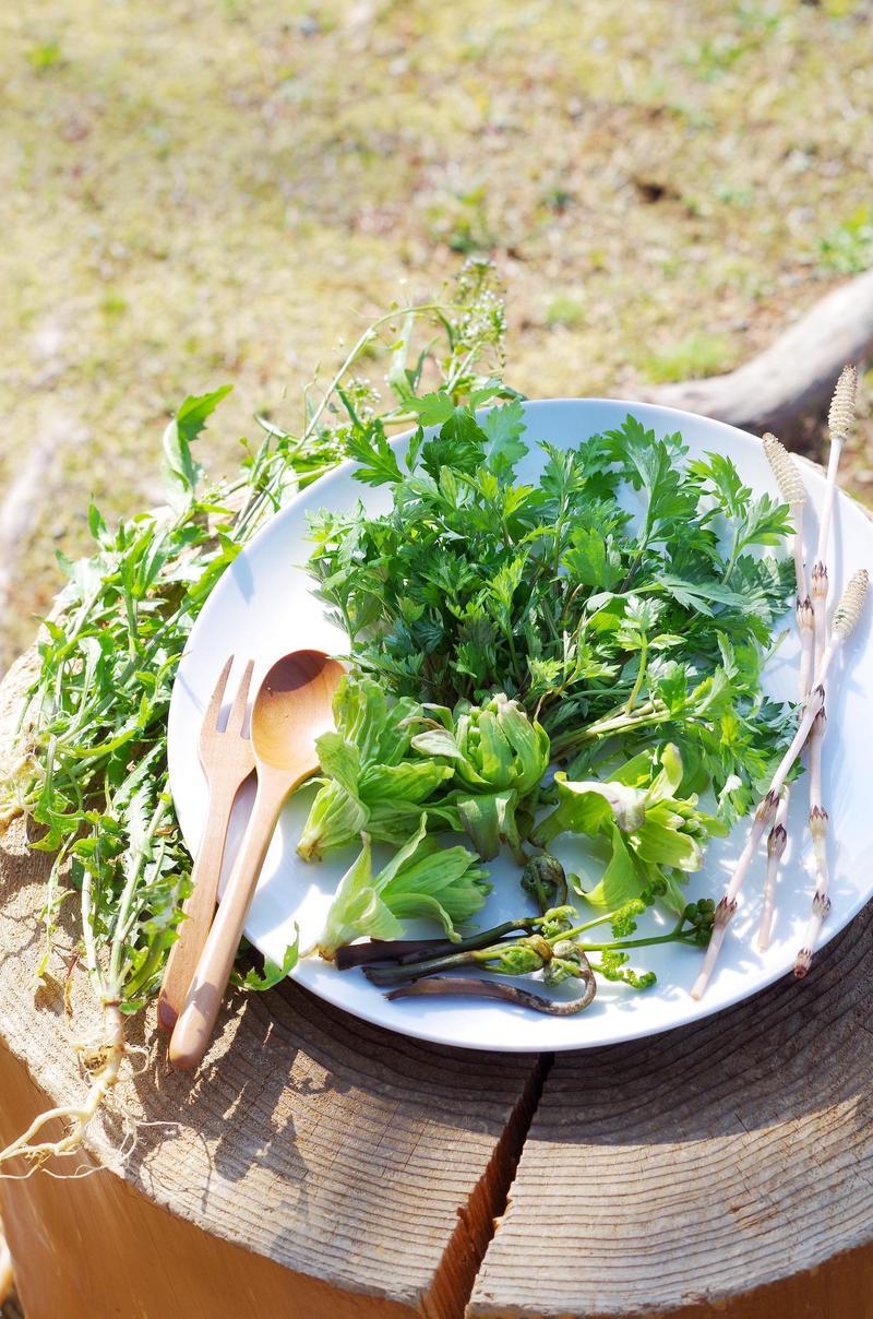 写真:はるみばぁばの森の食卓 ~さるとりいばら・よもぎを使っておまんじゅう作り~
