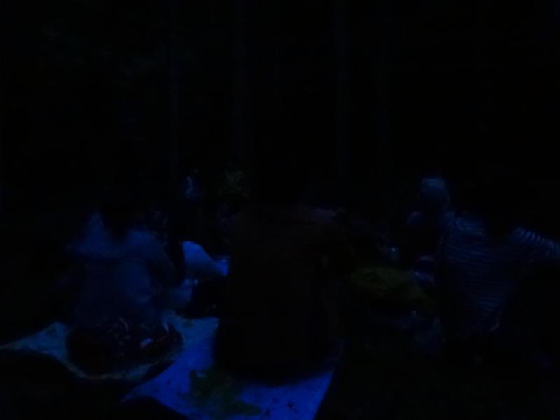 写真: ネイチャーゲーム③夜の森はお友だち